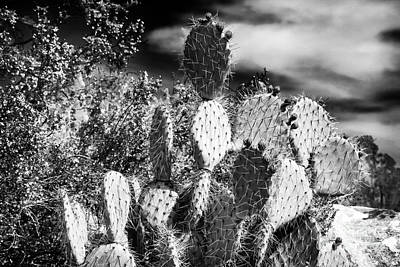 Photograph - Cacti In The Desert by John Rizzuto