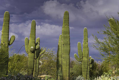 Lenz Wall Art - Photograph - Cacti In The Sky by George Lenz