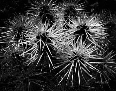 Photograph - Cacti by Xueling Zou