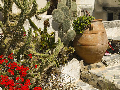 Photograph - Cactii In Santorini by Brenda Kean