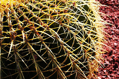 Photograph - Cactus 10 by Cheryl Boyer