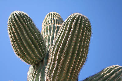 Photograph - Cactus 16 by Cheryl Boyer