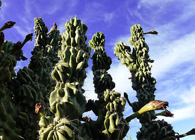 Photograph - Cactus 2 by Mariusz Kula