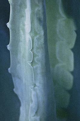 Photograph - Cactus 2 by Sherri Meyer