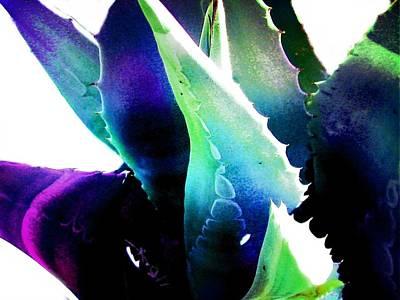 Flowers Digital Art - Cactus 3 by Cindy Edwards