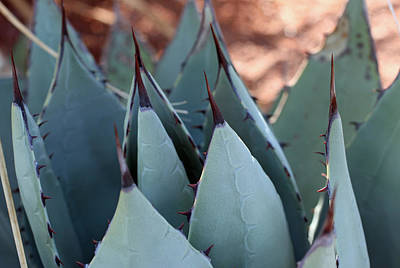 Photograph - Cactus 6 by Cheryl Boyer