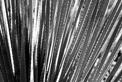 Cactus 7 Art Print