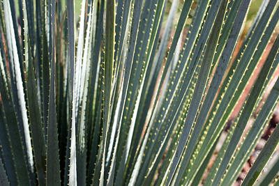 Cactus 8 Art Print