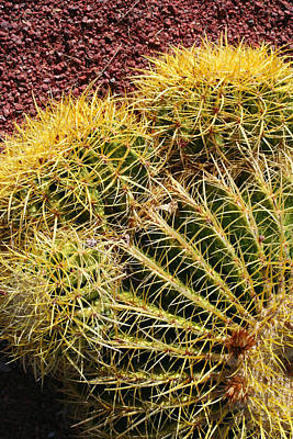 Photograph - Cactus 9 by Cheryl Boyer