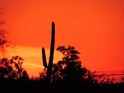 Photograph - Cactus Against A Blazing Sunset by Bill Tomsa