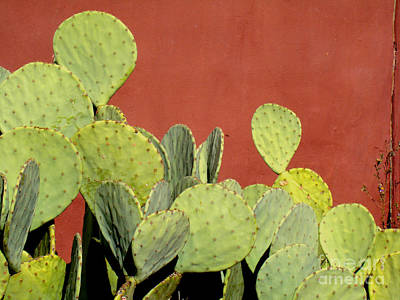 Photograph - Cactus Against Orange Wall by Eva Kato