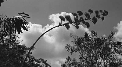 Art Print featuring the photograph Cactus And Cloud by Kenny Glotfelty