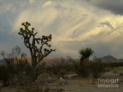 Photograph - Cactus And Clouds by Stephen Schaps