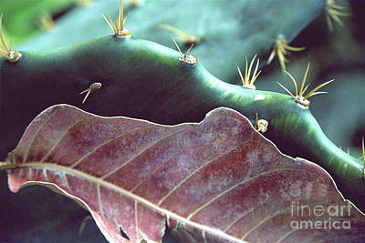 Photograph - Cactus And Dry Leaf Color by Heather Kirk
