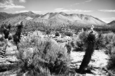 Mountain Photograph - Cactus And Mesquite by Hugh Smith