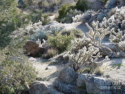 Cactus And Rocks Art Print by Deborah Smolinske