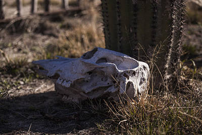 Photograph - Cactus And Skull by Amber Kresge