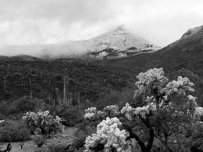 Photograph - Cactus And Snow Black And White by Laurel Powell