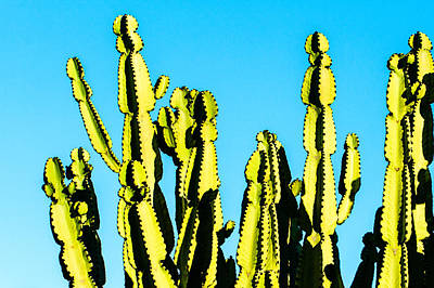 Photograph - Cactus At Sunset by Ben Graham