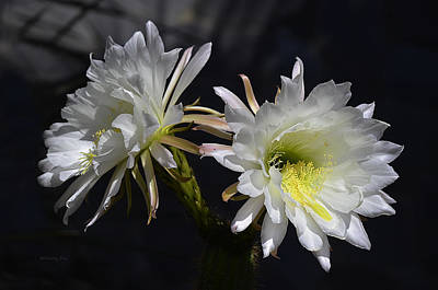 Photograph - Cactus Blossom 10 by Xueling Zou