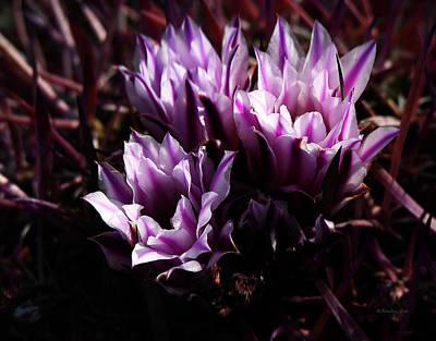 Garden Photograph - Cactus Blossom 3 by Xueling Zou