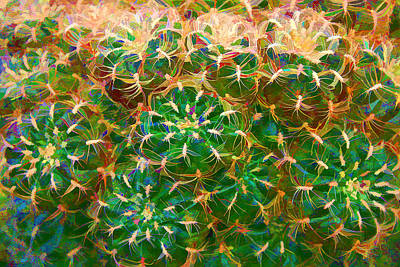 Photograph - Cactus by Brian Davis