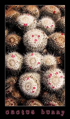Photograph - Cactus Bunny by Weston Westmoreland