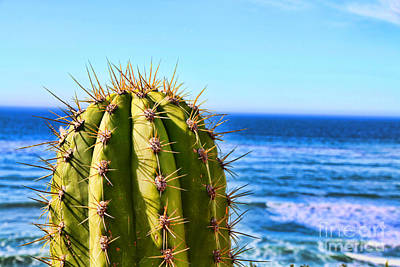 Photograph - Cactus By The Sea By Diana Sainz by Diana Raquel Sainz