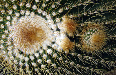 Photograph - Cactus Close-up by Joyce  Wasser