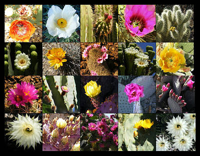 Marilyn Photograph - Cactus Collage by Marilyn Smith