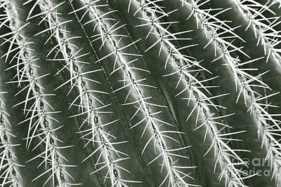 Photograph - Cactus Detail by Liz Leyden