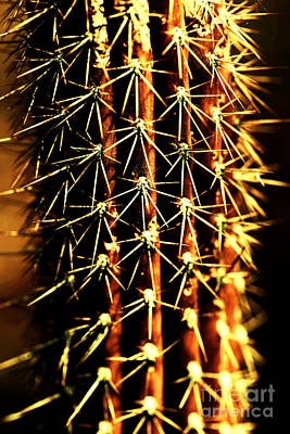 Photograph - Cactus Fire by John Rizzuto