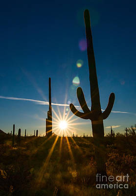 Dry Brush Wall Art - Photograph - Cactus Flare - Sunrise At Saguaro National Park by Jamie Pham