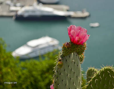 Photograph - Cactus Flower Above The Port Of Nice by Allen Sheffield