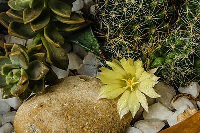 Photograph - Cactus Flower by Allen Sheffield
