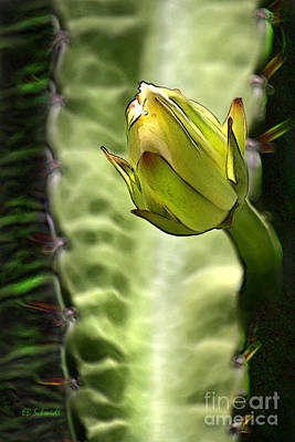 Digital Art - Cactus Flower Bud by E B Schmidt