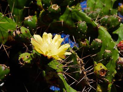 Photograph - Cactus Flower by Jouko Lehto