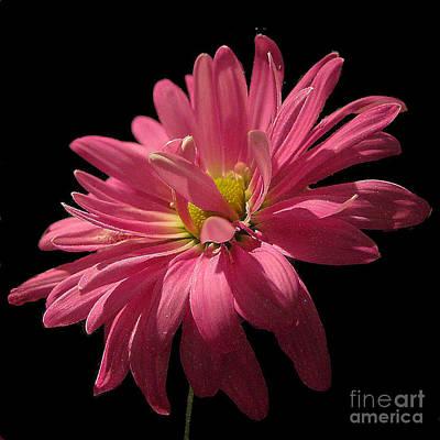 Photograph - Cactus Flower No. 2 by Merton Allen