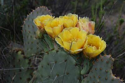 Spot Of Tea Royalty Free Images - Cactus Flower Royalty-Free Image by Steve Scheunemann