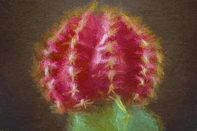 Photograph - Cactus Flower Textured Painted In Digital by David Haskett