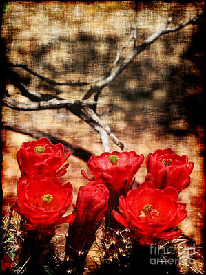 Cactus Flowers 2 Print by Julie Lueders
