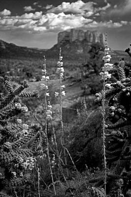 Art Print featuring the photograph Cactus Flowers And Courthouse Bluff Bw by Dave Garner
