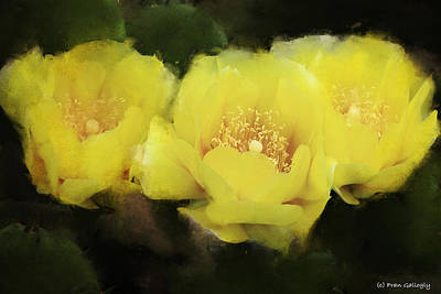 Photograph - Cactus Flowers by Fran Gallogly