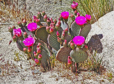 Cactus Flowers Art Print by Gregory Dyer