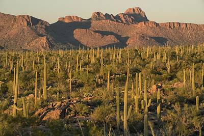 Mountins Photograph - Cactus Forest by Christian Heeb