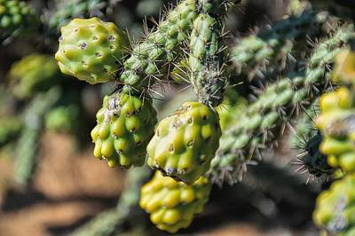 Photograph - Cactus Fruit by Diana Mary Sharpton
