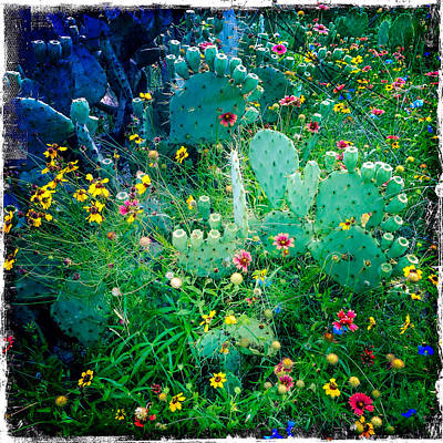 Photograph - Cactus Garden by Randy Green