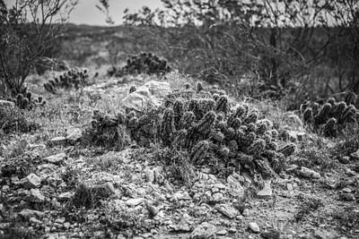 Photograph - Cactus Headstones by Amber Kresge