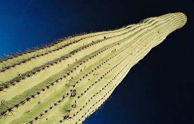 Photograph - Cactus High by David Flitman