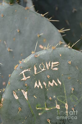 Photograph - Cactus In Belle Isle by Randy J Heath